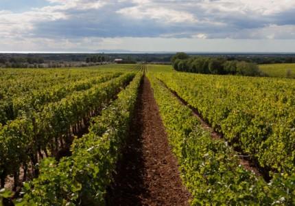 sapaio winery in bolgheri tuscany
