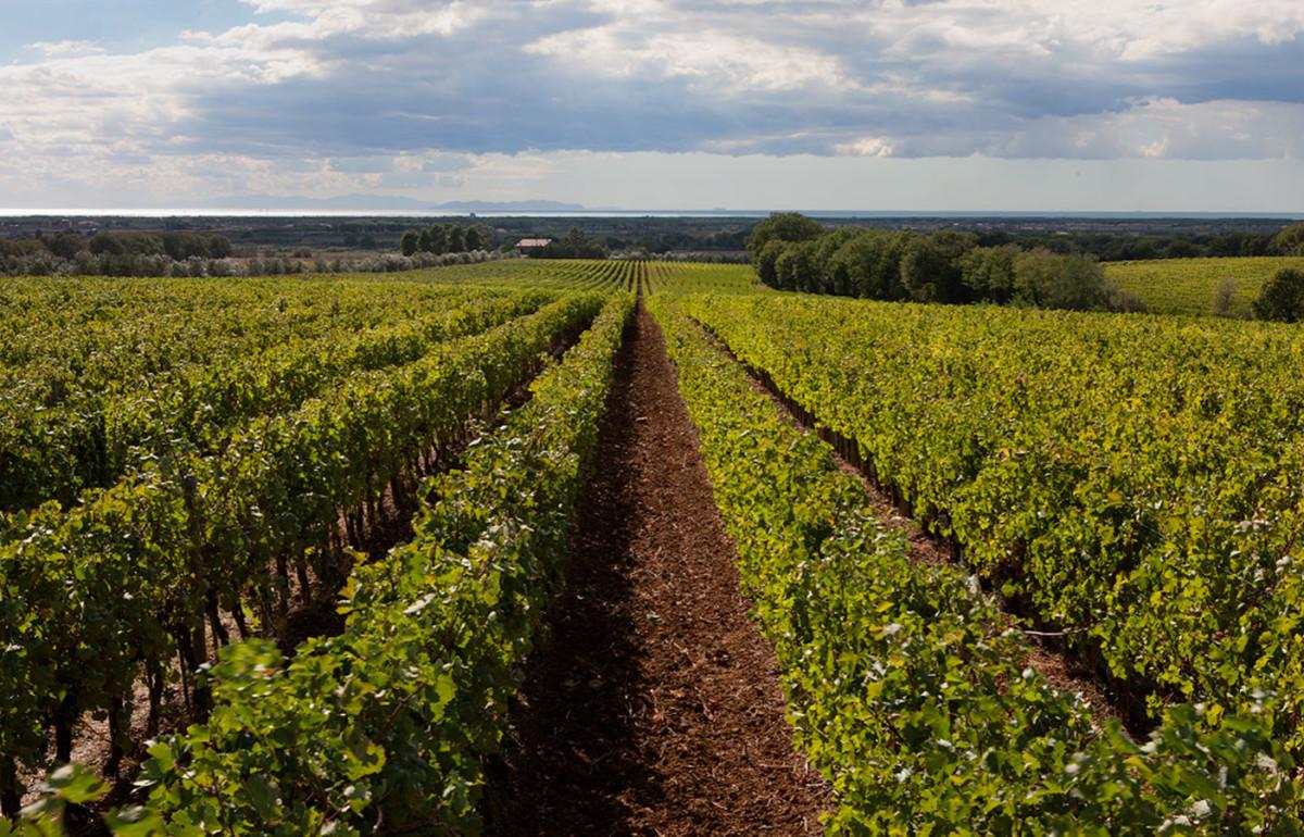 Maremma in Tuscany Italian wine destination spring