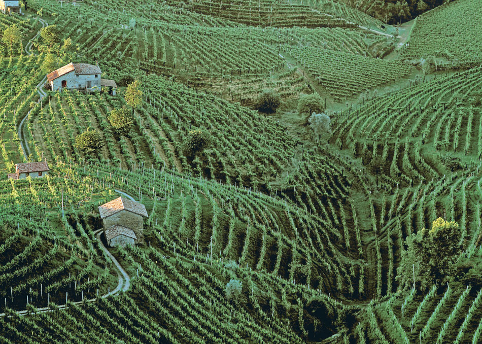 Steep, terraced vineyards of Valdobbiadene
