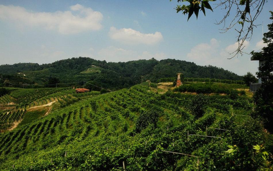 Vineyards in Alto Piemonte.