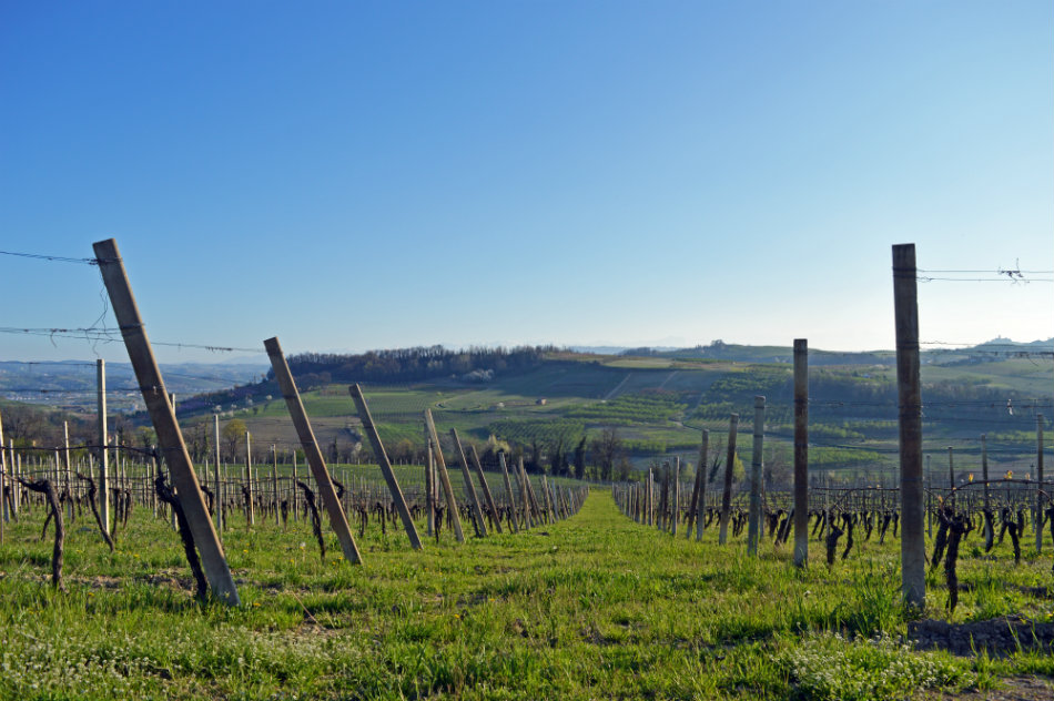 Hiking vineyard trails in the spring - © Tenuta Carretta
