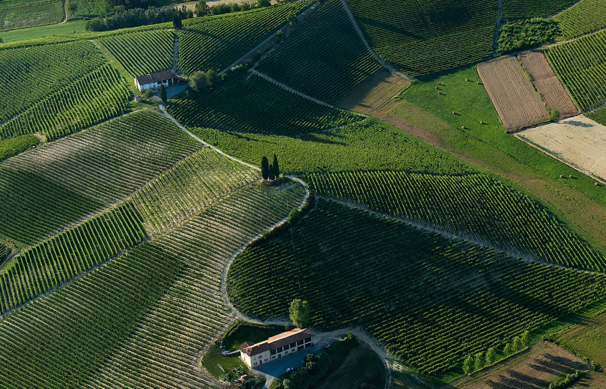 la court cru vineyards at michele chiarlo
