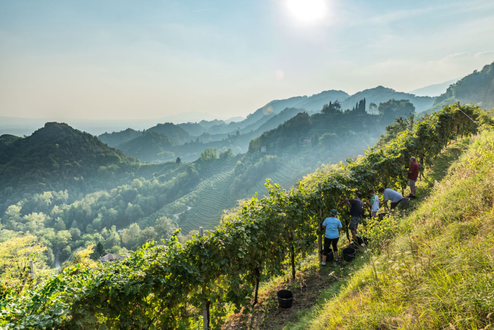 heroic viticulture in valdobbiadene a veneto wine region