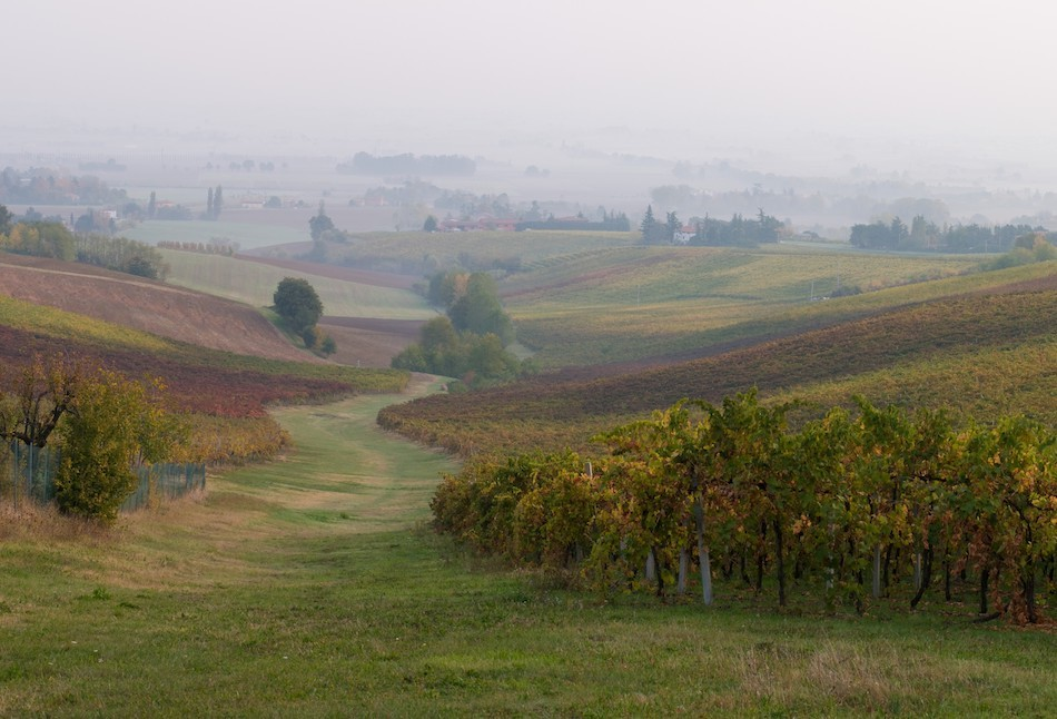 The Vines in Autumn - by Umberto Cesari Winery