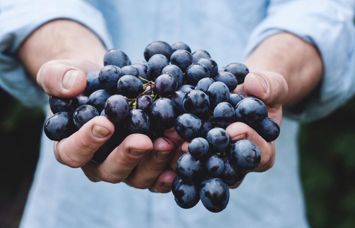 A Handful of Grapes - by Maja Petric