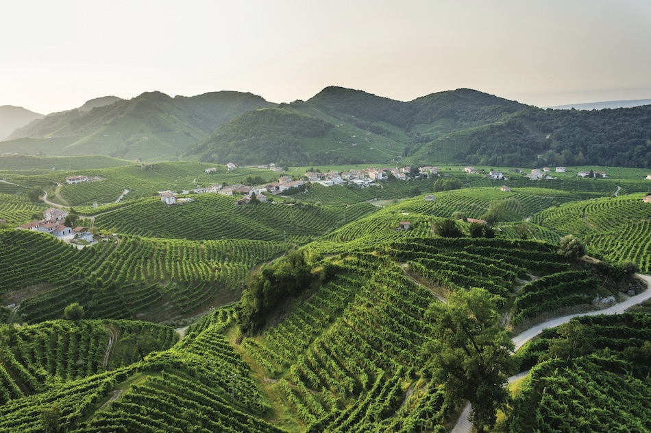 a panorama of the vineyards on the hills of Valdobbiadene
