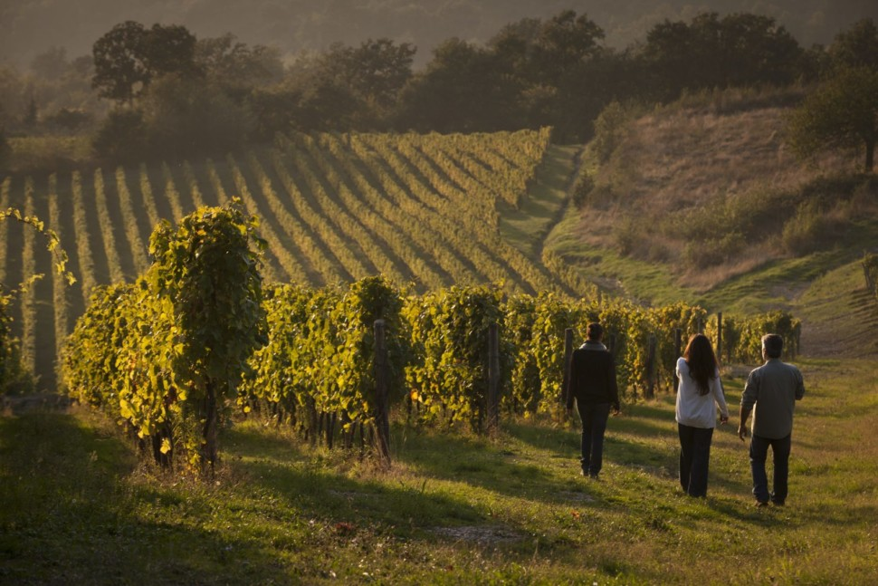 A group of three people on a guided tour of the vineyards at Feudi di San Gregorio