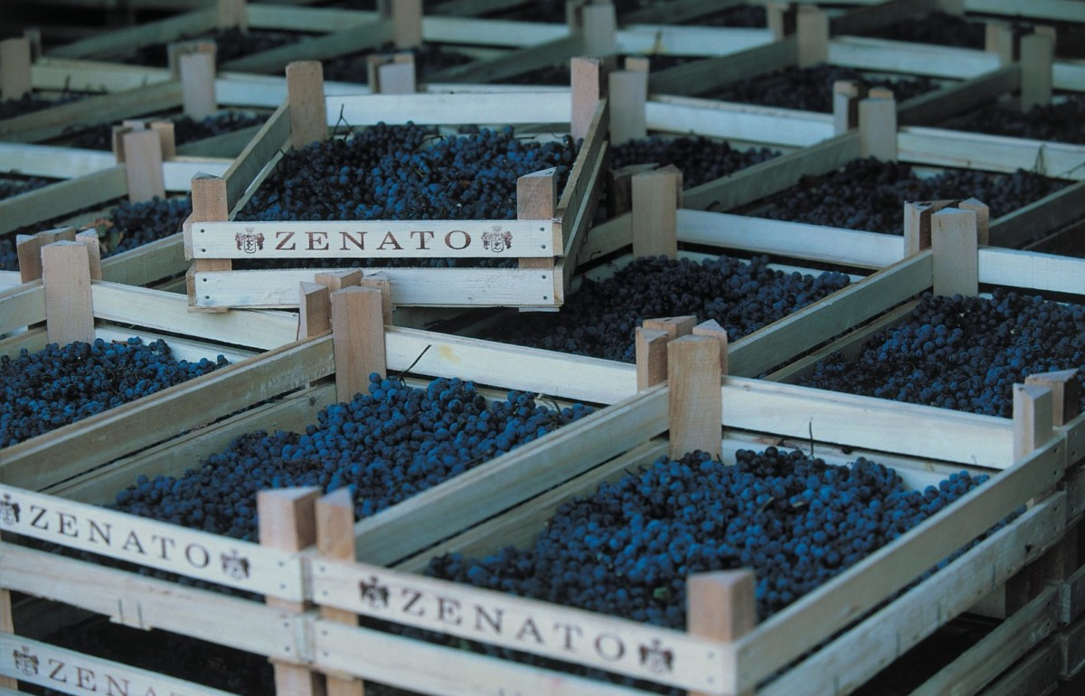 Wooden Zenato crates filled with red grape clusters