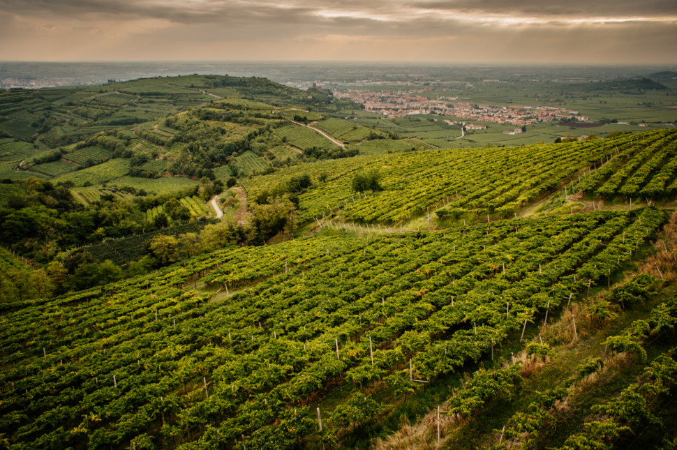 vineyards in Soave a veneto wine region
