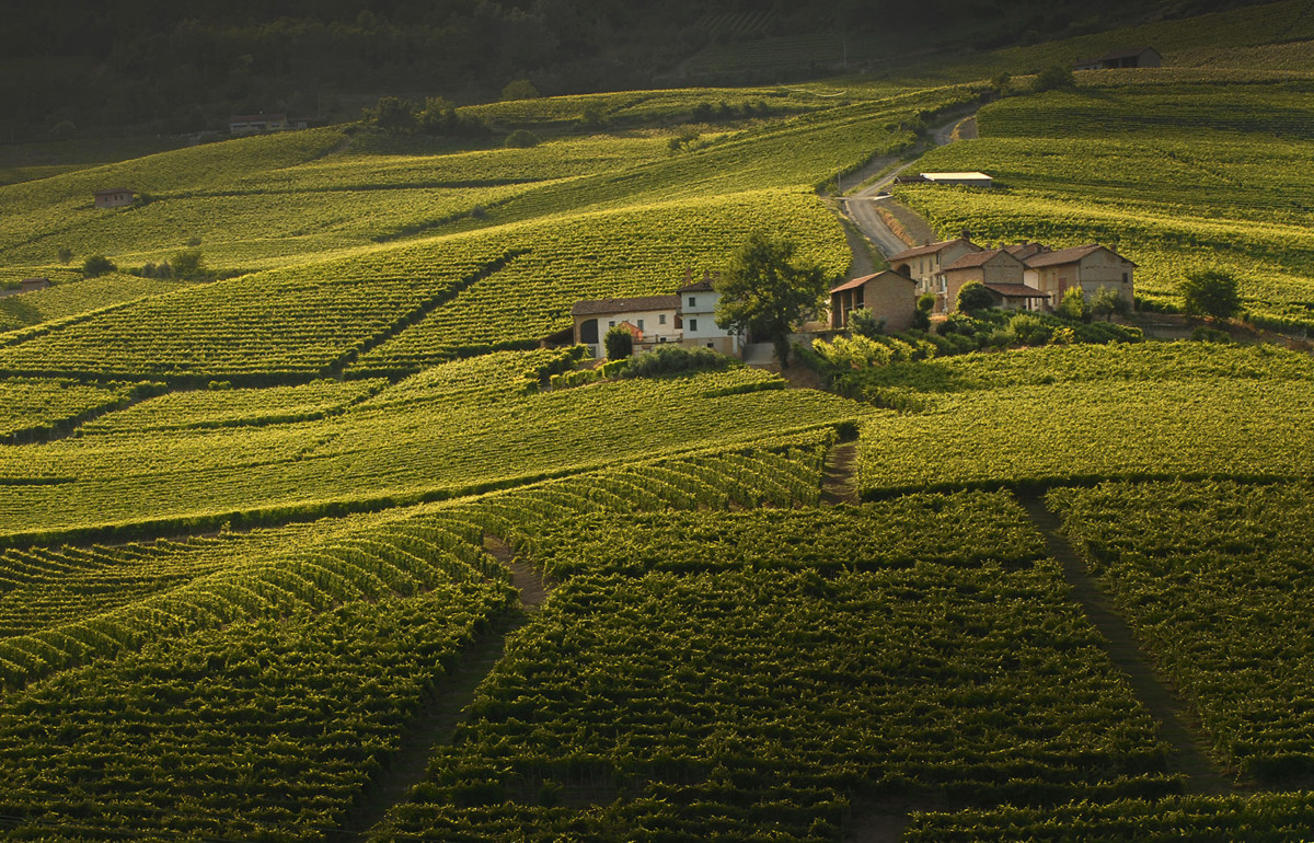 The Grand Wine Tour - Piedmont