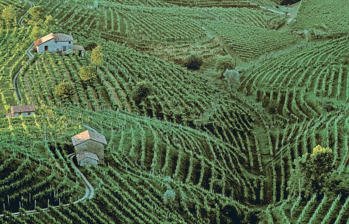 The Grand Wine Tour - Veneto wine region