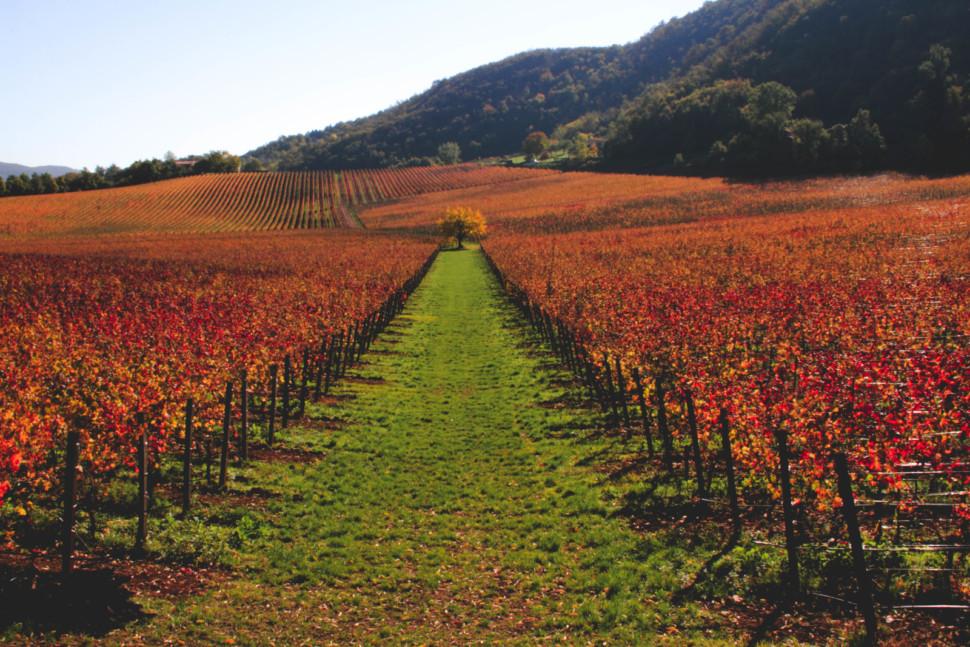 veneto is a top italian wine region