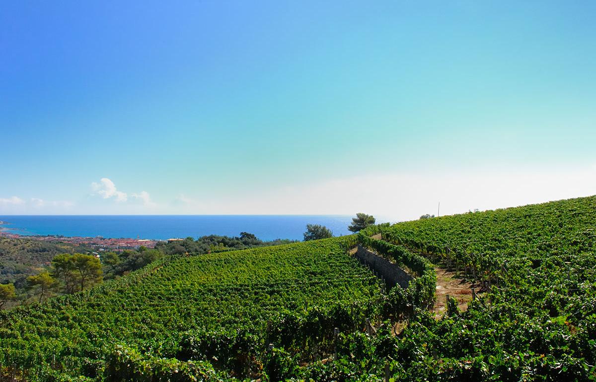 Gorleri Wine Resort