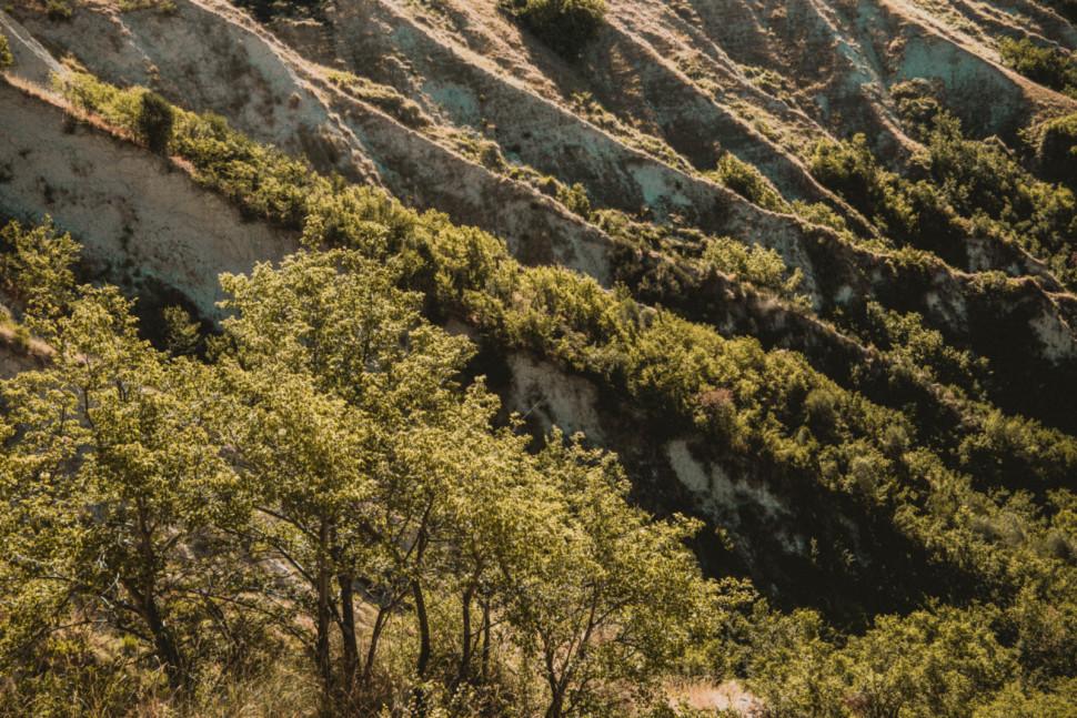 biodiversity tenuta cocci grifoni