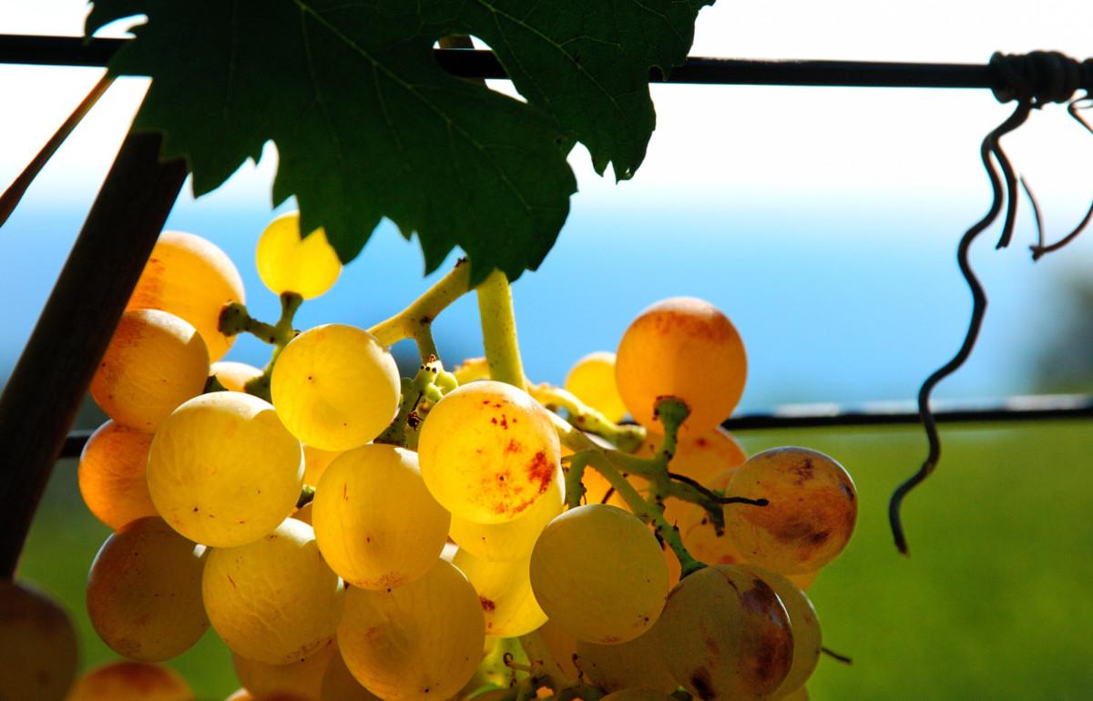 cover two poggio dei gorleri wine to sea