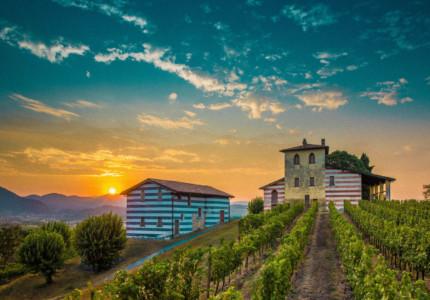 berlucchi wineyards