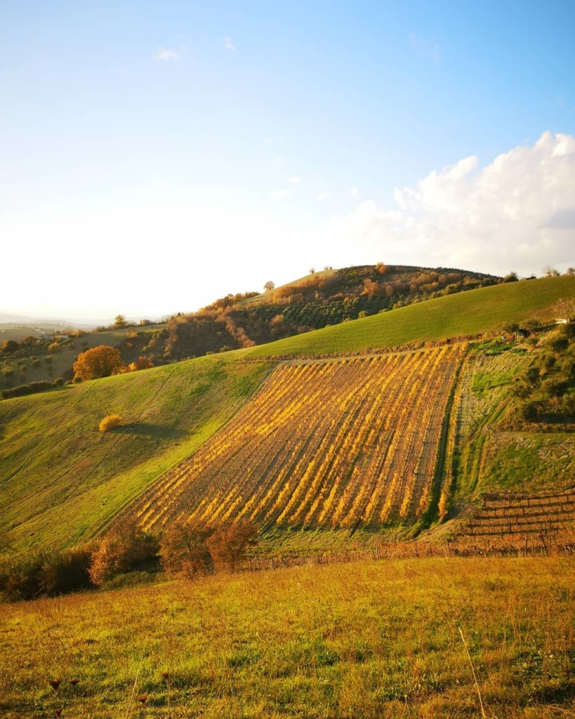 marche countryside italian wine destination spring