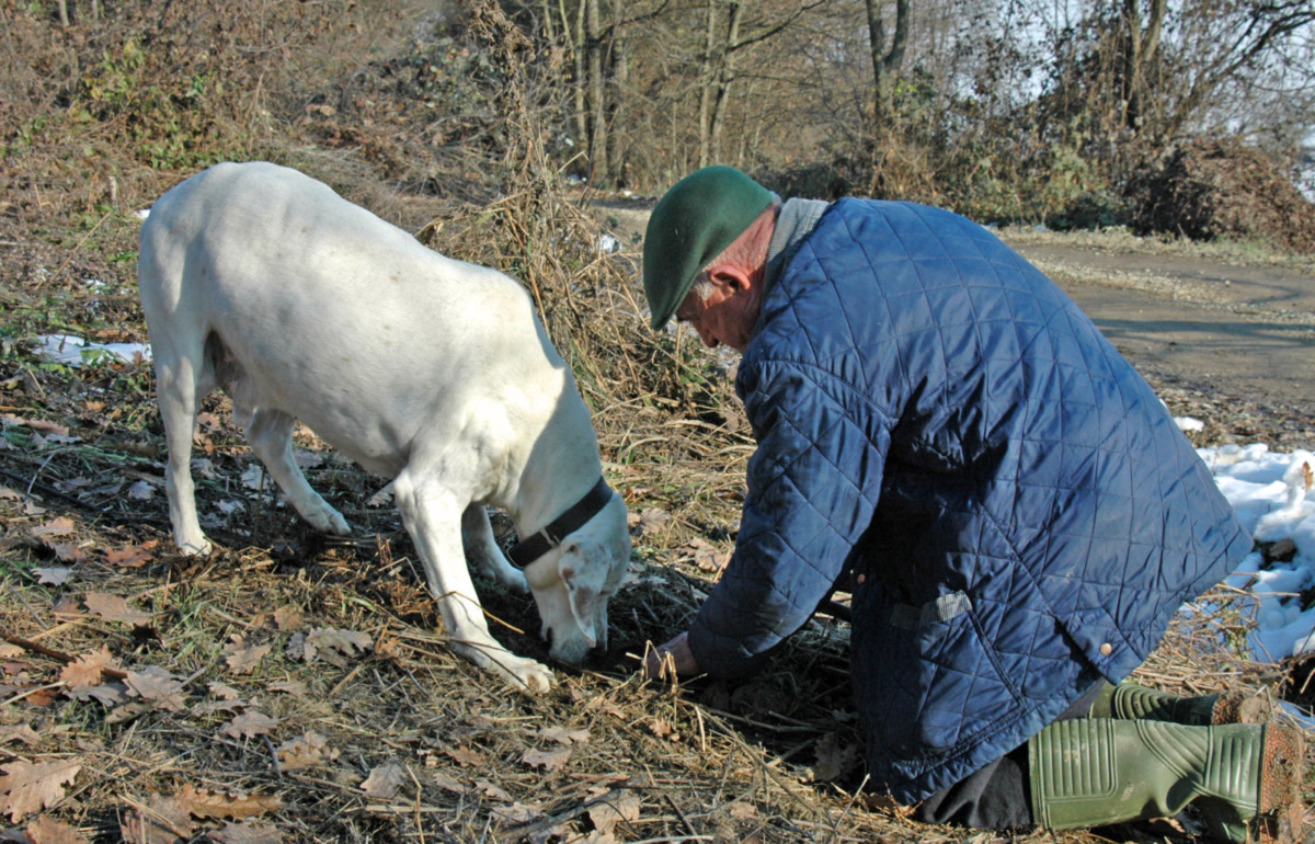 Truffle hunting with a dog